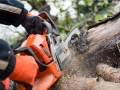 Well Established Tree Surgery Business with Large Client Base - Ref 1634